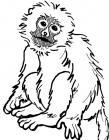 Oi! Monkey! Gerroff!
